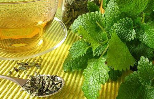 Чай из мелиссы и мяты польза и вред. Состав и польза мелиссы