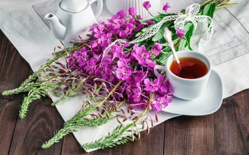 Самые полезные травы для организма человека. Какие травы можно заваривать вместо чая каждый день
