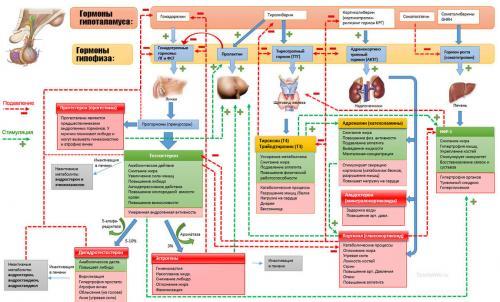 Катаболизм и анаболизм. Анаболизм и катаболизм