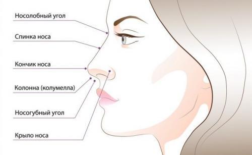 Форма носа женщины и характер. Форма носа и характер