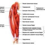 Анатомия приседаний.   Мы начнем с работы мышц.
