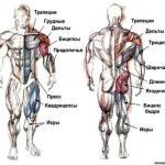 Комплекс лучших упражнений на каждую группу мышц.