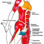 Упражнения для ягодиц и ног (для женщин).