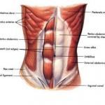 Мышцы кора.  Мышцы кора - это целый комплекс мышц, которые отвечают за стабилизацию таза, бедер и позвоночника.