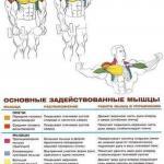 Дельтовидные мышцы: комплекс упражнений анатомия!