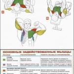 Упражнения анатомия для мышц груди.