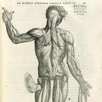 10 самых интересных фактов о мышцах.