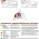Мышцы спины: упражнения анатомия.